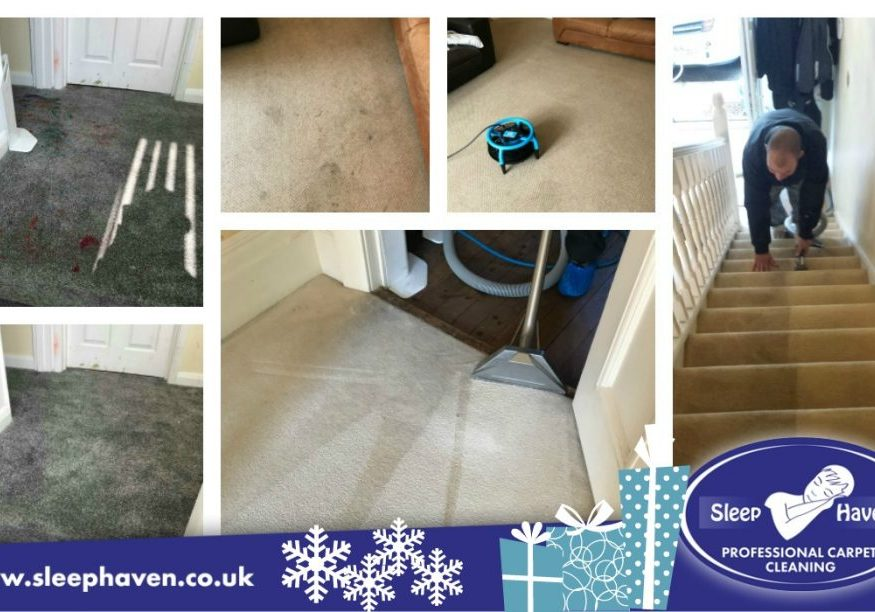 Carpet Cleaning Special Offers